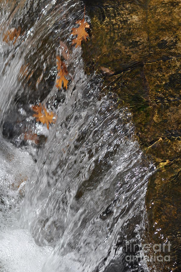 Leaves In The Water Photograph  - Leaves In The Water Fine Art Print