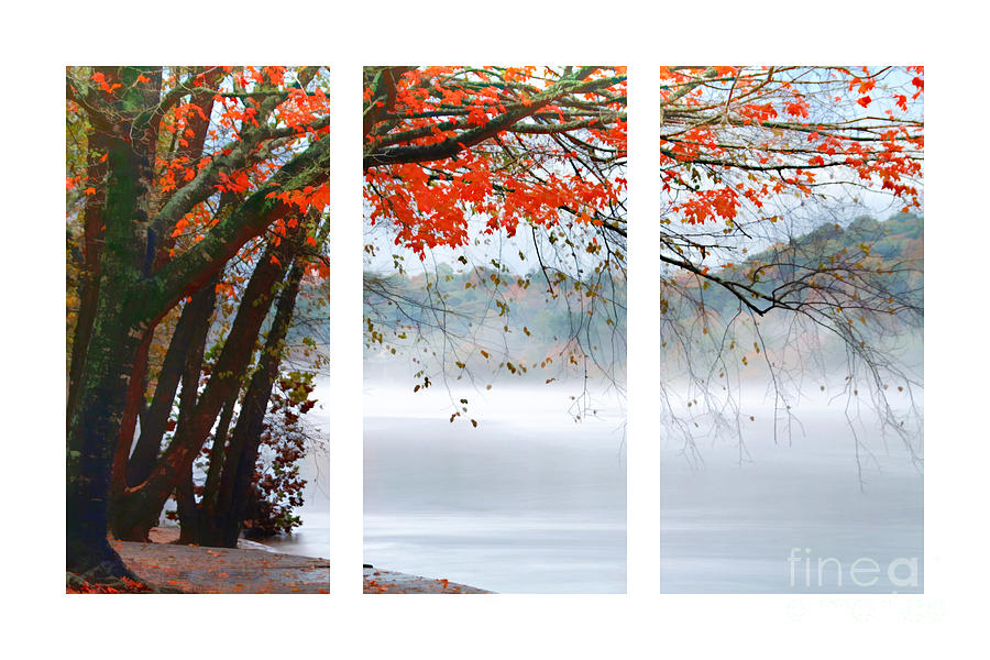 Autumn Photograph - Leaves Of Red by Darren Fisher