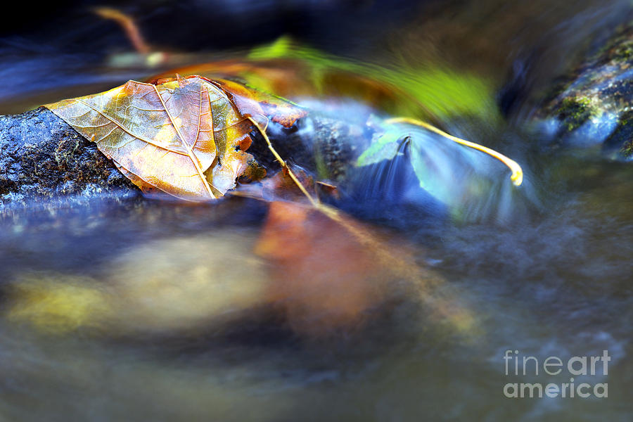 Leaves On Rock In Stream Photograph