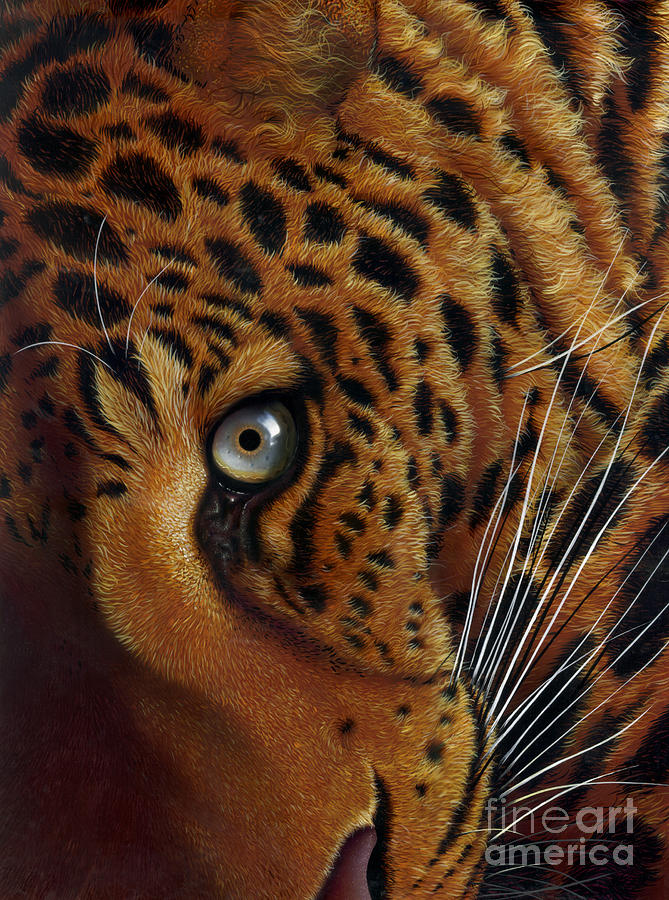 Leopard Painting  - Leopard Fine Art Print