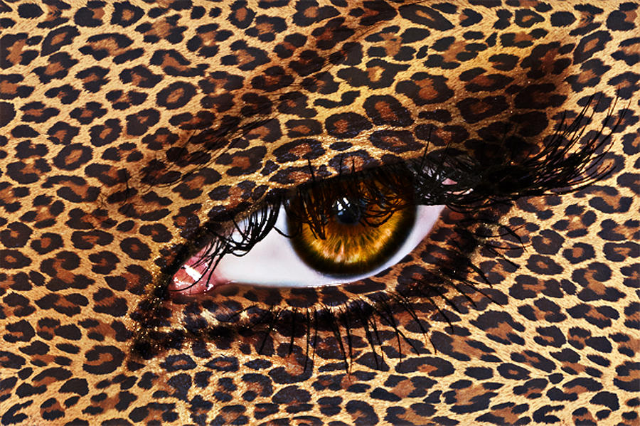 Leopard Photograph  - Leopard Fine Art Print