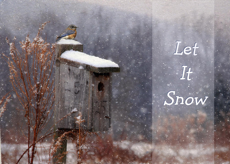 Let It Snow - Bluebirds Photograph  - Let It Snow - Bluebirds Fine Art Print