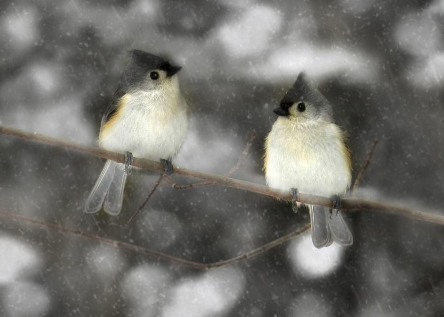 Let It Snow Photograph  - Let It Snow Fine Art Print