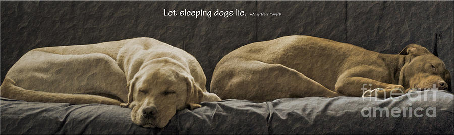 Let Sleeping Dogs Lie Photograph