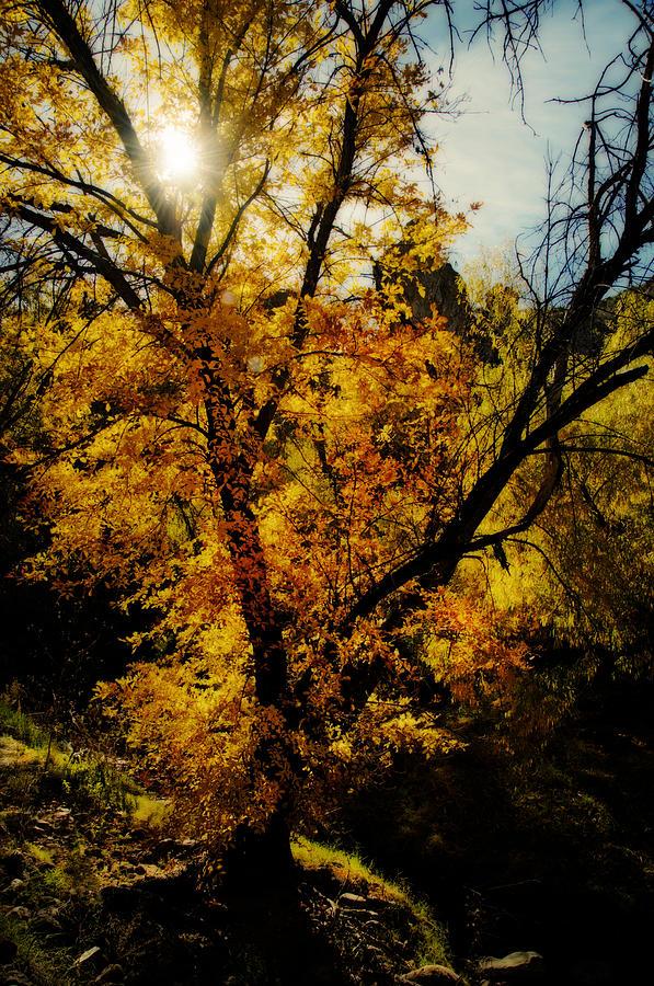 Let The Sun Shine  Photograph