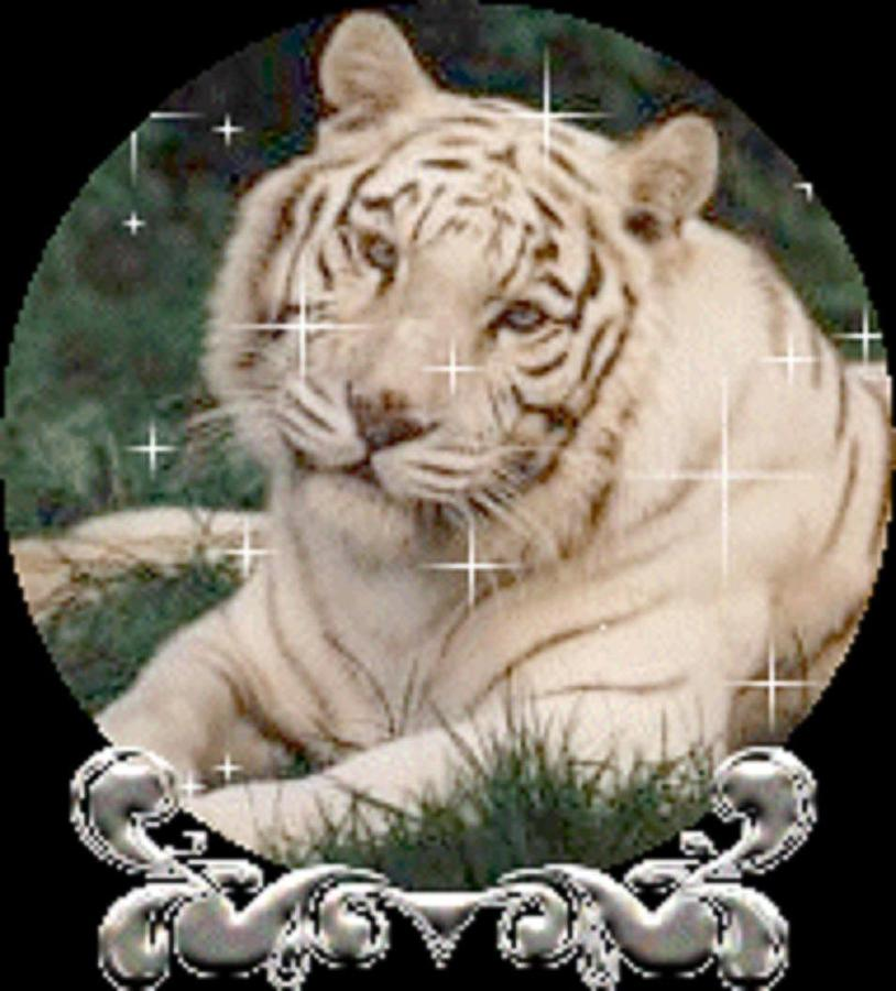 Letout The Tiger Inside Digital Art