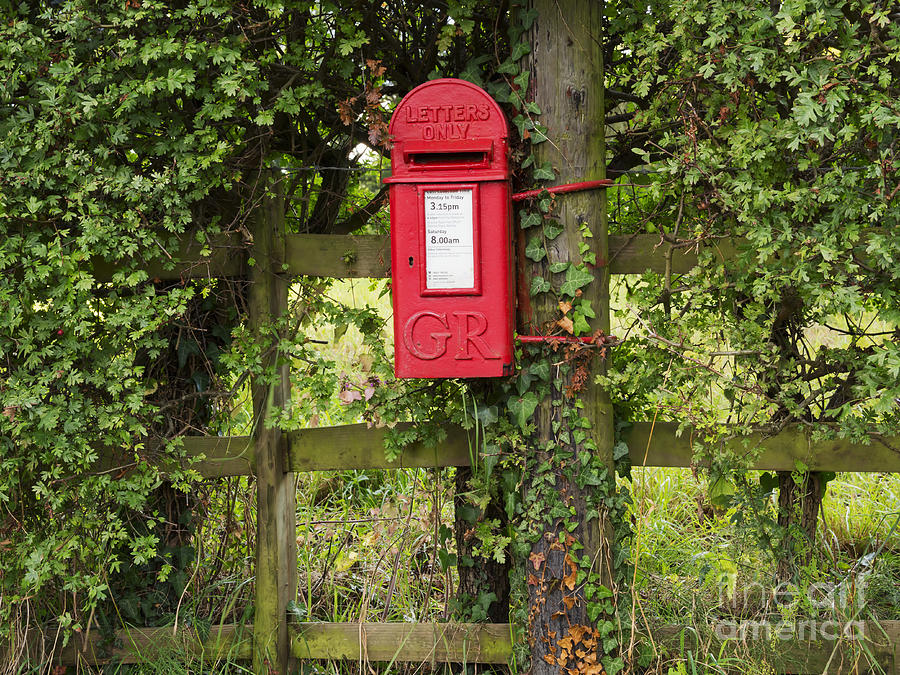 Letterbox In A Hedge Photograph  - Letterbox In A Hedge Fine Art Print