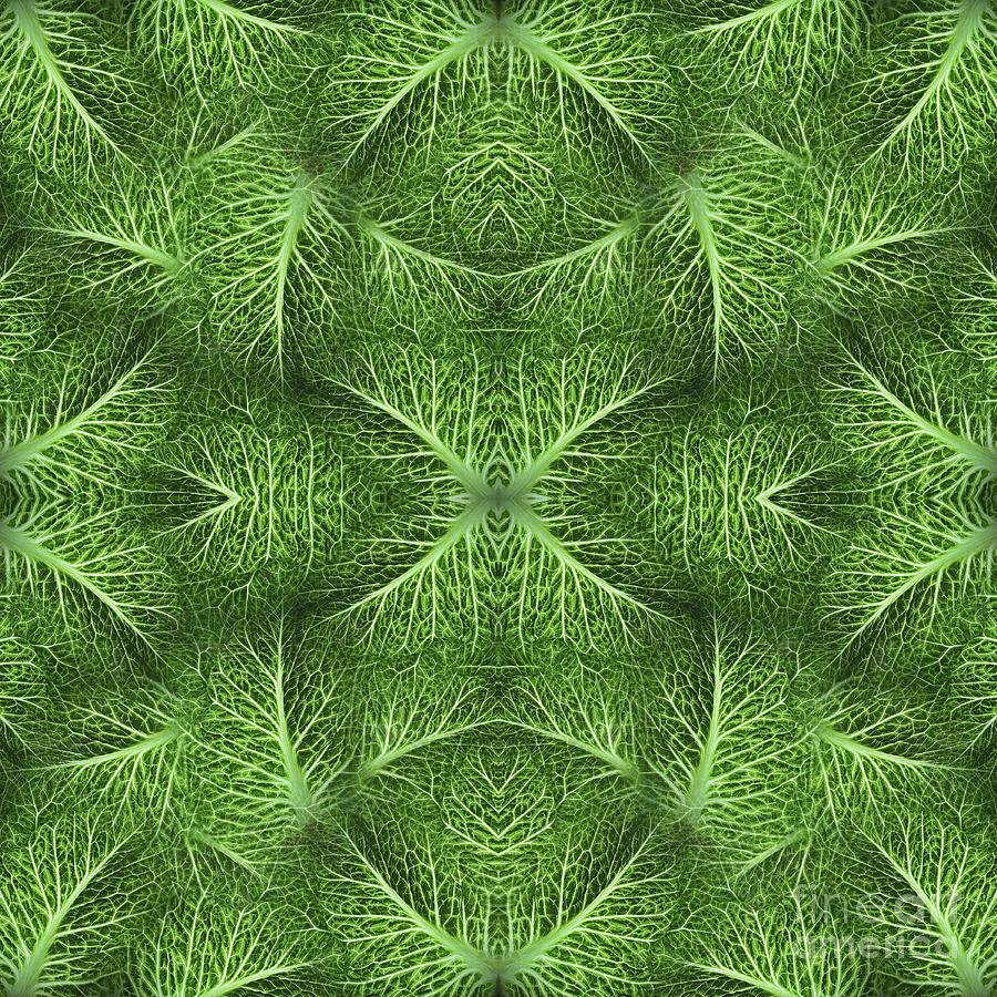 Lettuce Live Green  Photograph