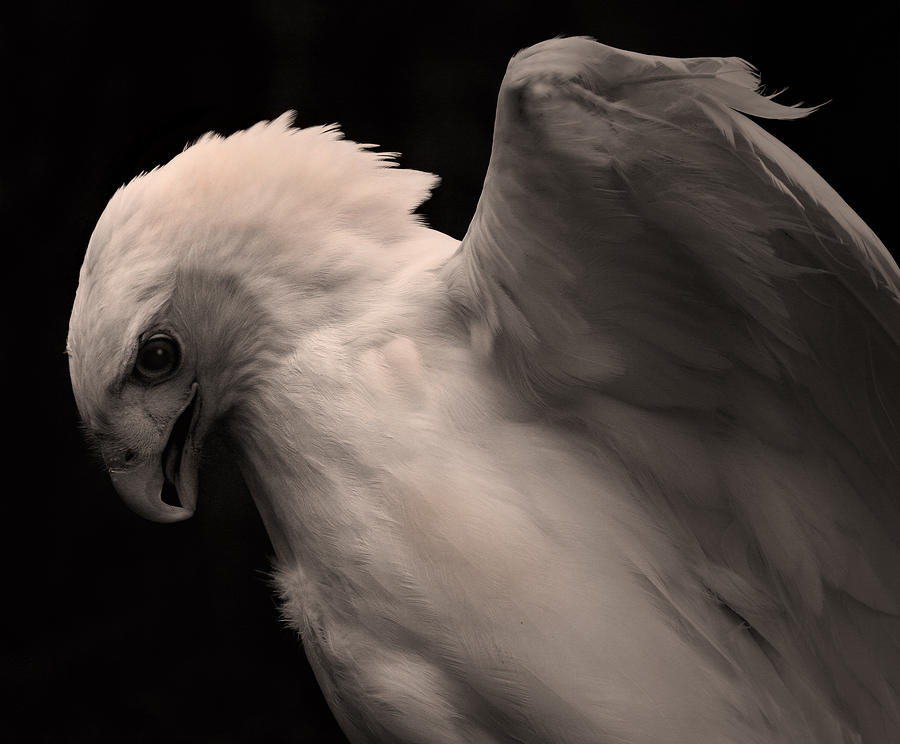 Albino Red Tail