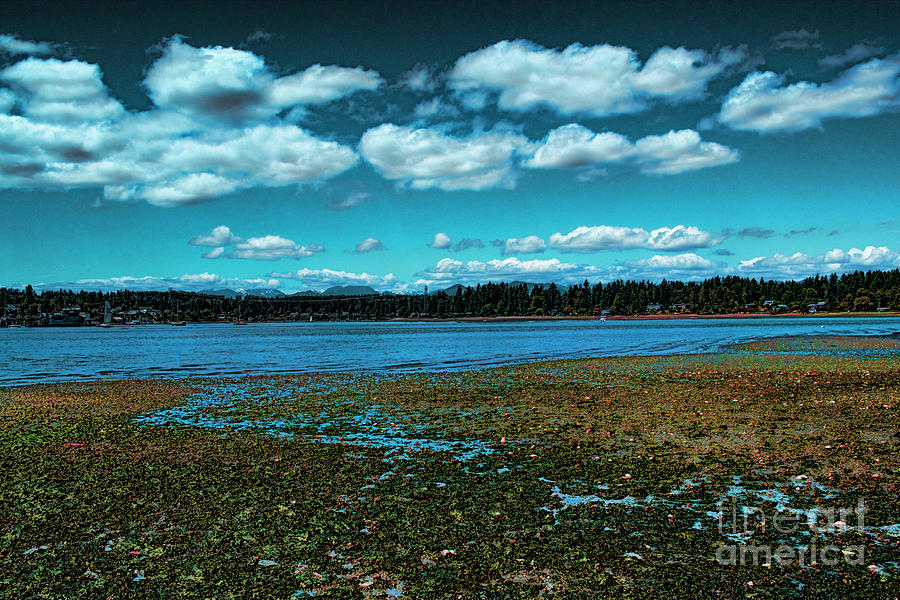Liberty Bay Seattle Wa Photograph  - Liberty Bay Seattle Wa Fine Art Print