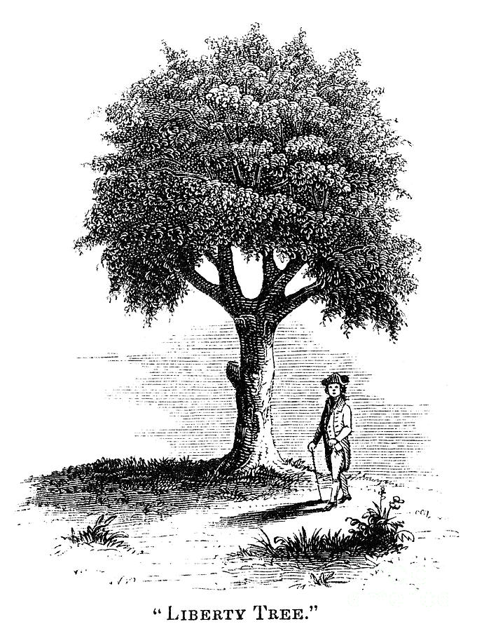 Liberty Tree, 1765 Photograph  - Liberty Tree, 1765 Fine Art Print