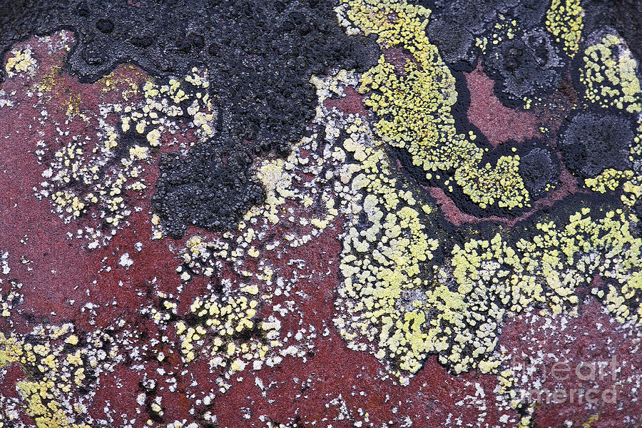 Lichen Pattern Series - 25 Photograph  - Lichen Pattern Series - 25 Fine Art Print