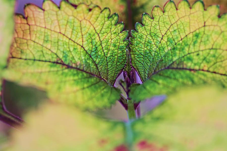 Patterns Photograph - Life 2 by Dawn Nicoli