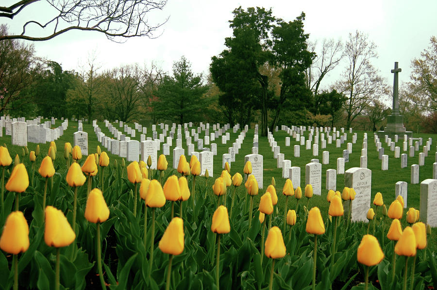 Life And Death At Arlington Photograph