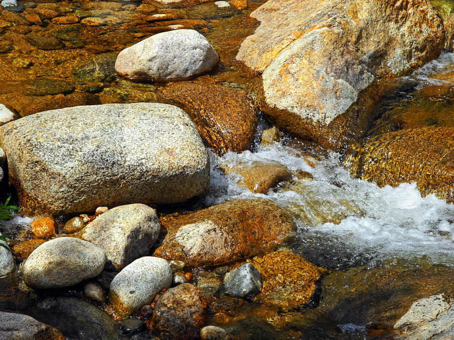Life Of The Riverbed Photograph  - Life Of The Riverbed Fine Art Print