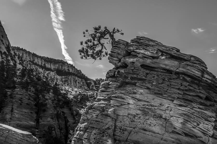 Zion Photograph - Life On The Edge by George Buxbaum