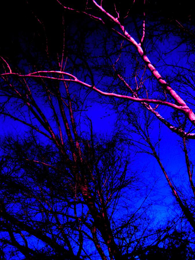 Light On Branches Photograph