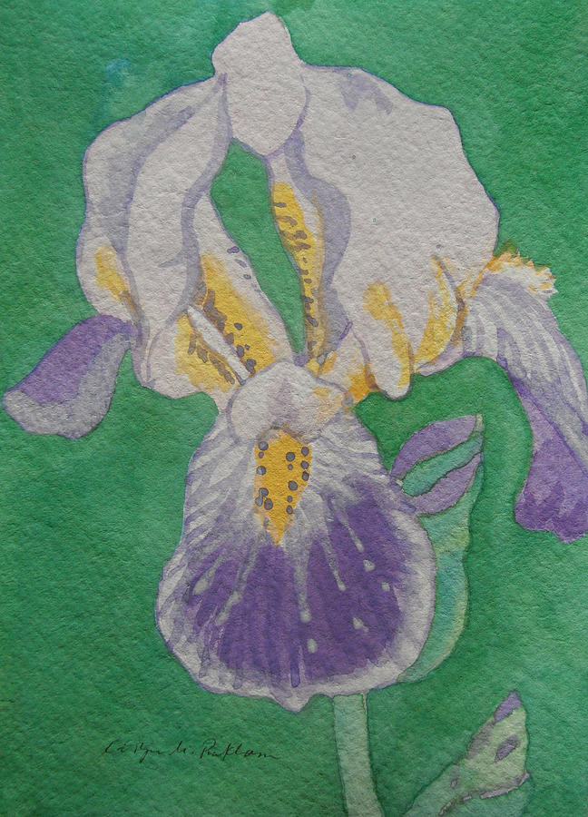 Light purple and yellow iris painting by kathryn pinkham for Purple and yellow painting
