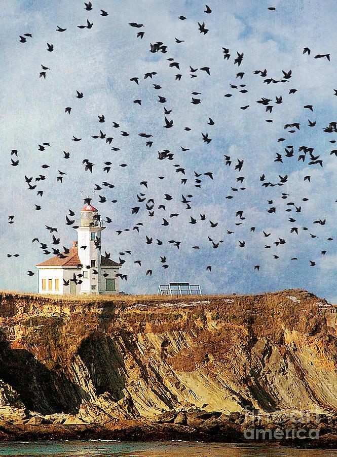 Lighthouse Birds  Photograph