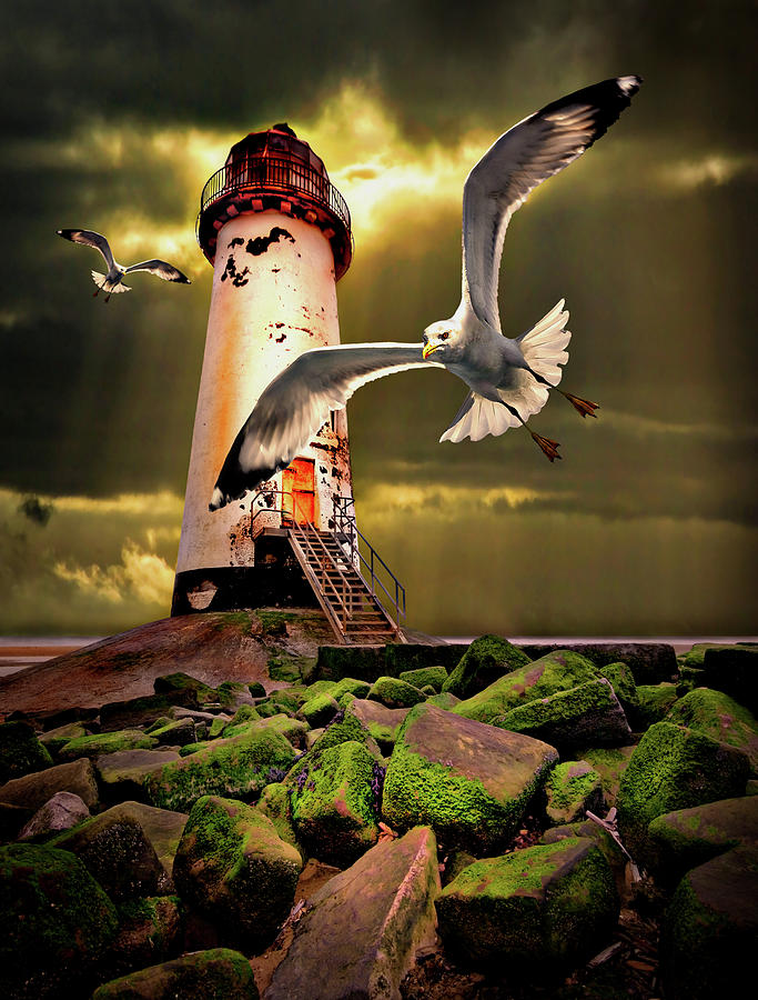 Lighthouse With Seagulls Photograph