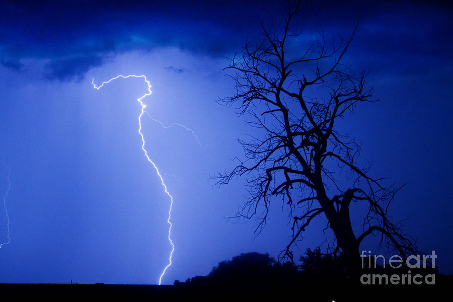 Lightning Tree Silhouette Photograph