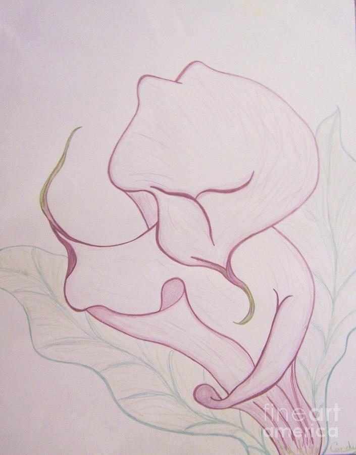 Lilac Calla Lilly Drawing  - Lilac Calla Lilly Fine Art Print