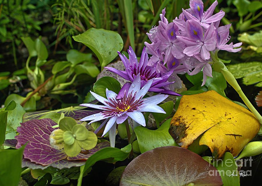 Exotic Cluster Of Water Lilies Photograph - Lilies No. 39 by Anne Klar