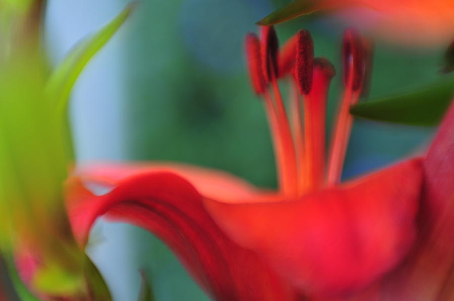 Flowers Photograph - Lilies1 by Peter Millar