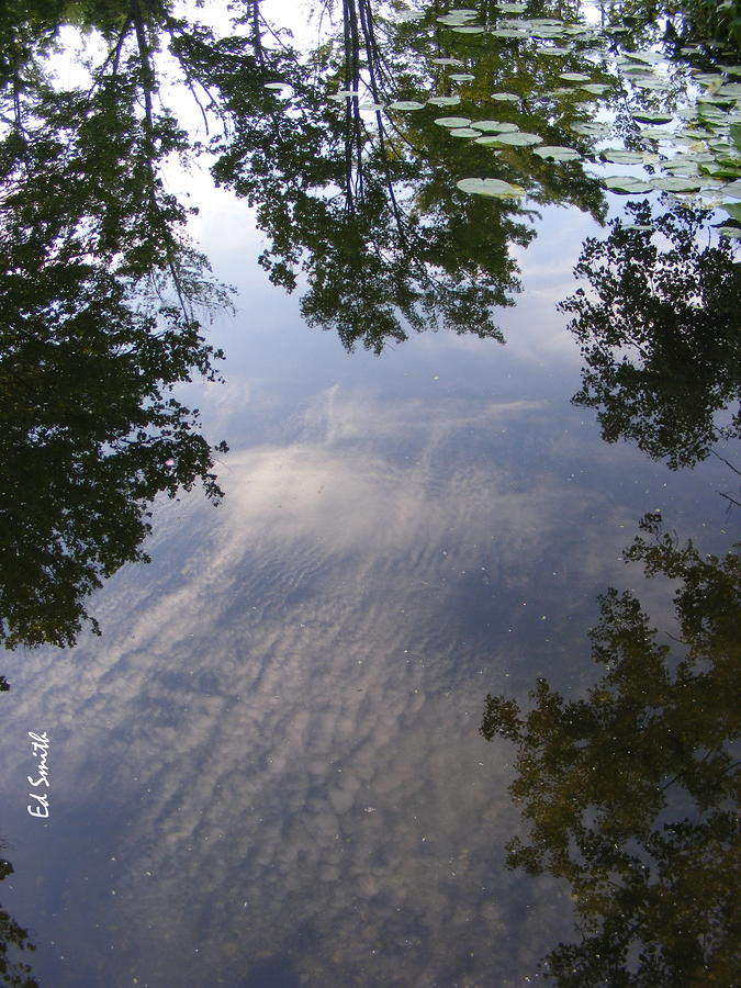 Lilly Pad Reflections Photograph