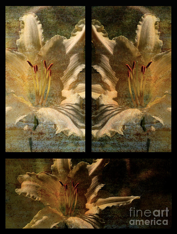 Lily Collage Photograph  - Lily Collage Fine Art Print