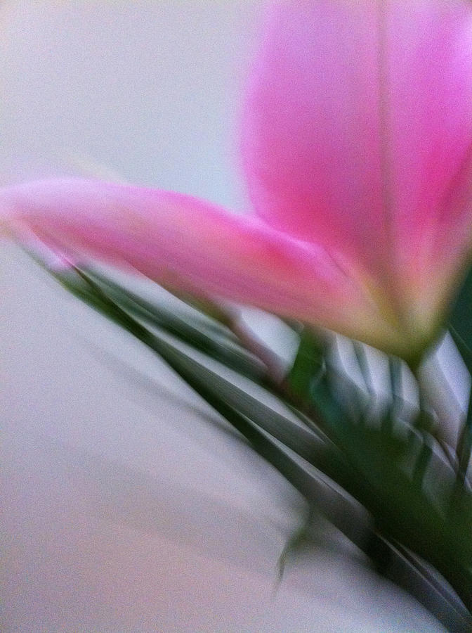 Lily In Motion Photograph