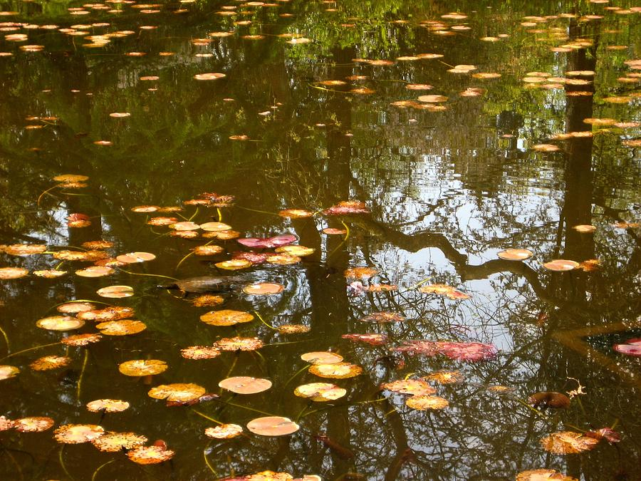 Lily Pad Reflections Photograph  - Lily Pad Reflections Fine Art Print