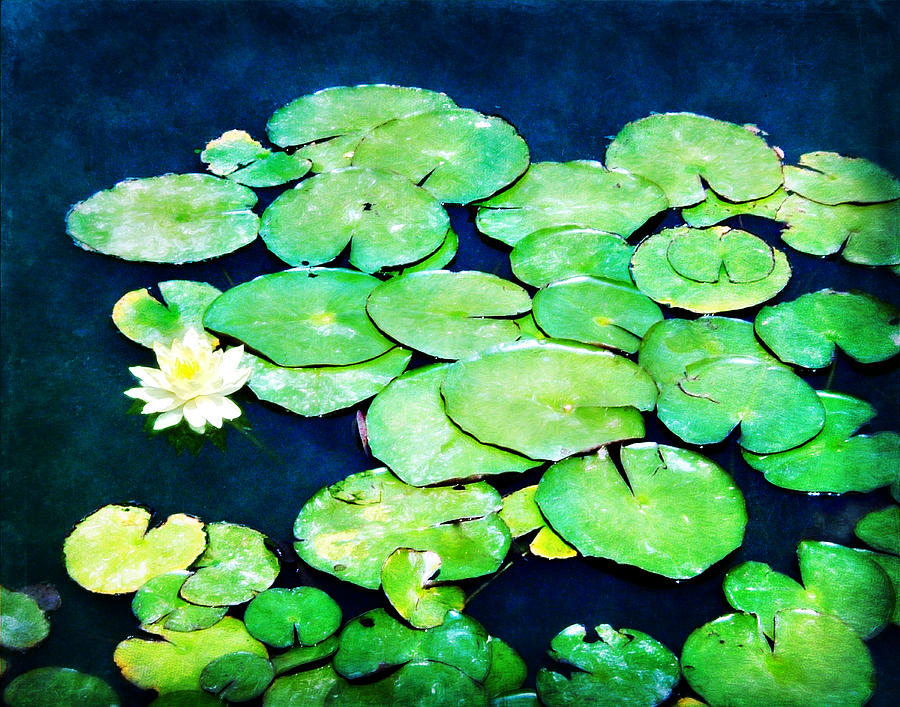 Lily Pads And Lotus Photograph  - Lily Pads And Lotus Fine Art Print