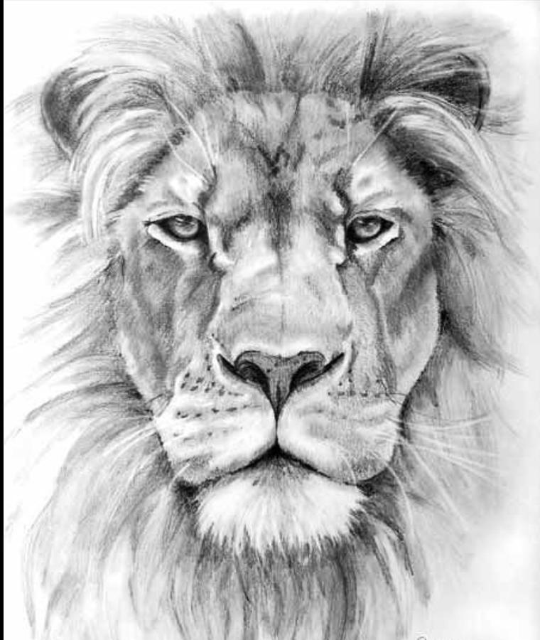 lion face sketch drawing by ivan patino. Black Bedroom Furniture Sets. Home Design Ideas