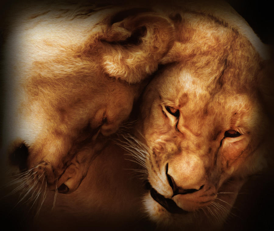 Lioness Love Digital Art  - Lioness Love Fine Art Print
