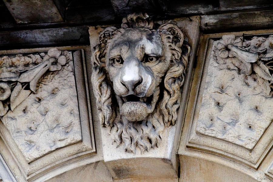 Lions Head Photograph