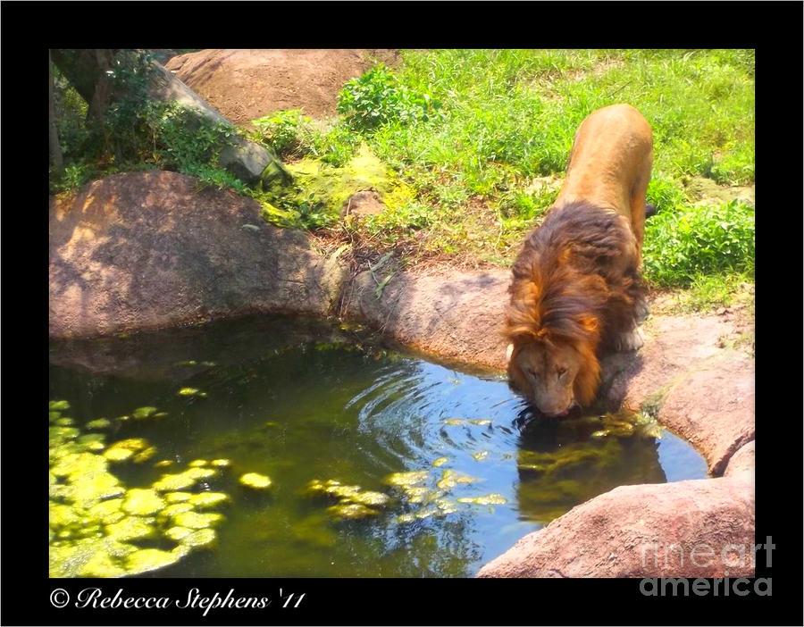 Lions Terrain Photograph