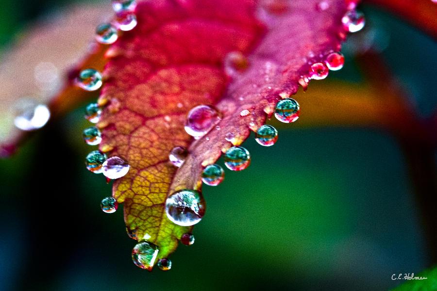 Liquid Beads Photograph