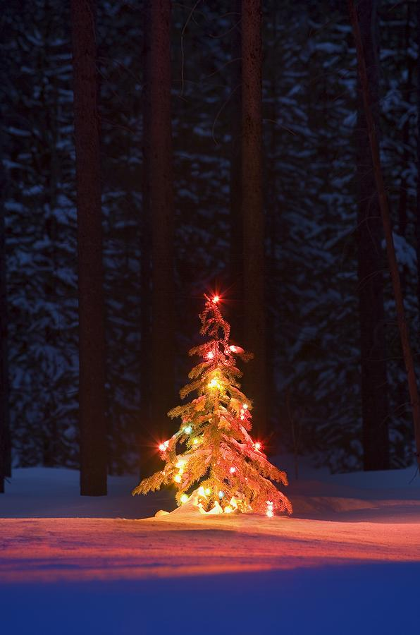 Lit Christmas Tree In A Forest Photograph  - Lit Christmas Tree In A Forest Fine Art Print
