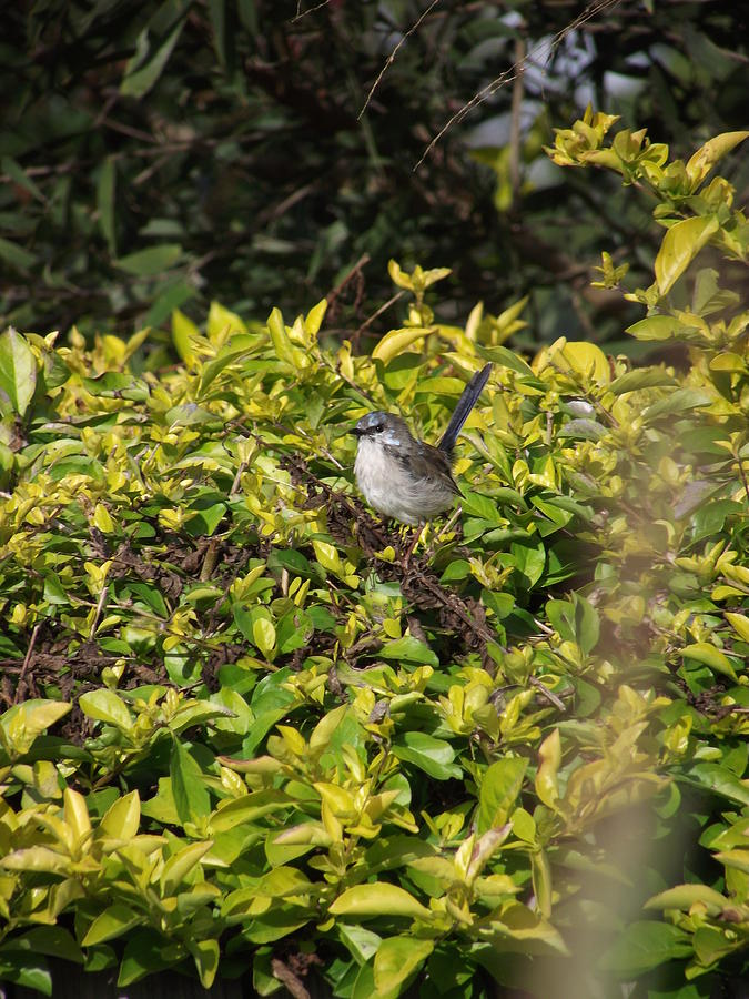 Little Bird Photograph