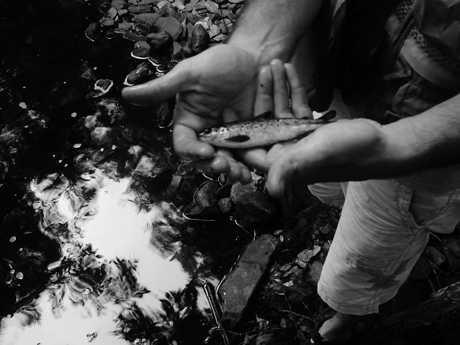 Fish Photograph - Little Fish by Sarah Buechler