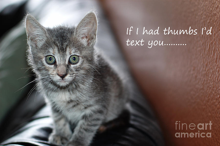 Kitten Photograph - Little Kitten Greeting Card by Micah May