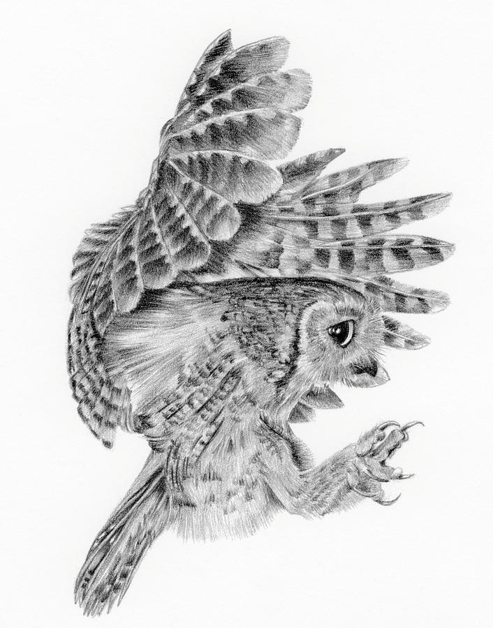 Flying owl drawings black and white - photo#23