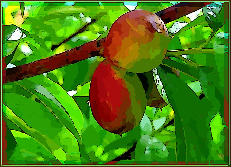 Fruit Photograph - Little Peaches by Mindy Newman