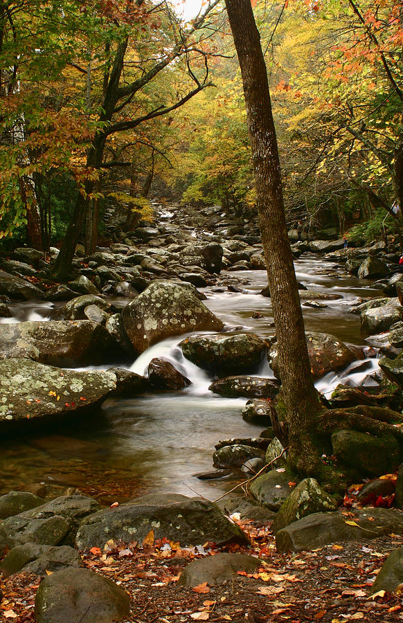 Little pigeon river gsmnp by shari jardina for Jardina