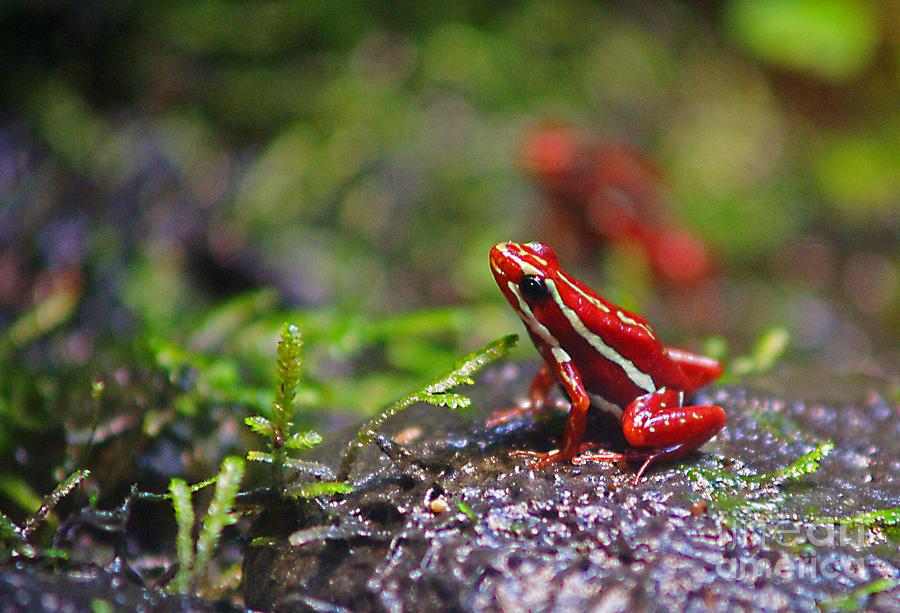 Back to Randy Harris | Art > Photographs > Frogs Photographs
