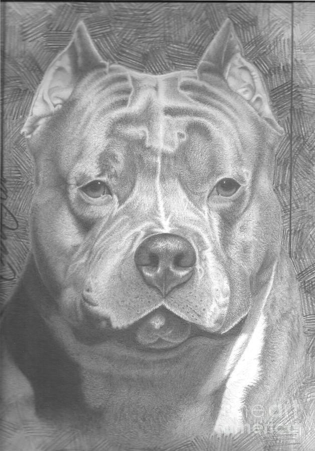 Portrait Drawing - Little Rock by Christian Garcia