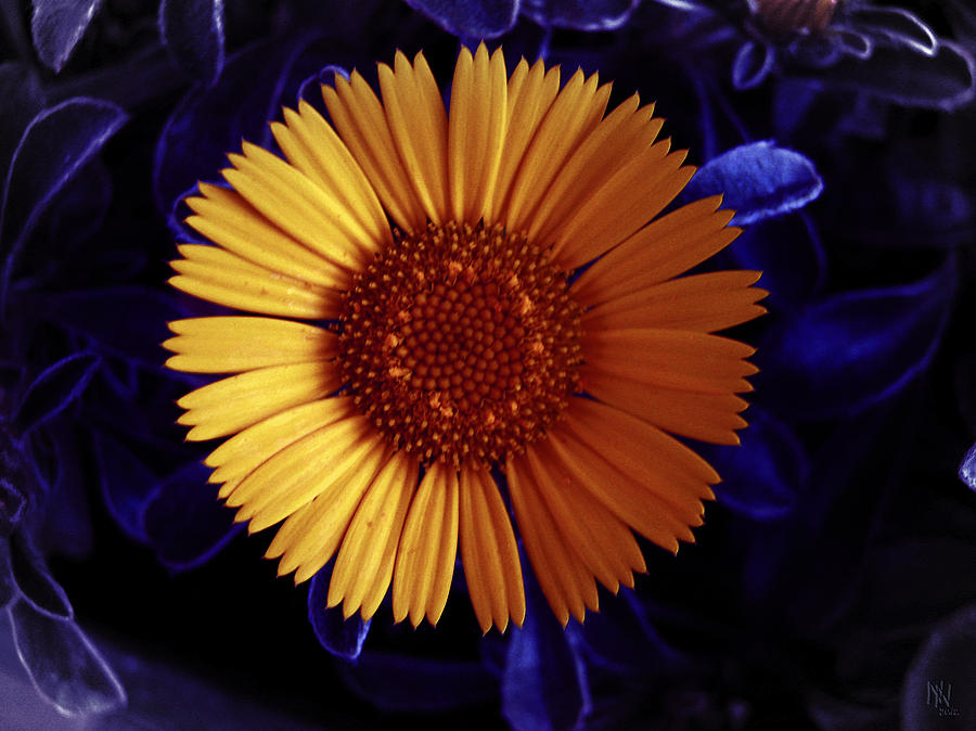 Spring Digital Art - Little Yellow Flower by Nafets Nuarb