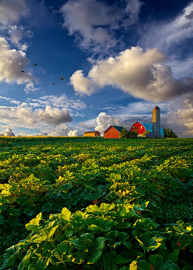 Living wisconsin by phil koch for Fine country living