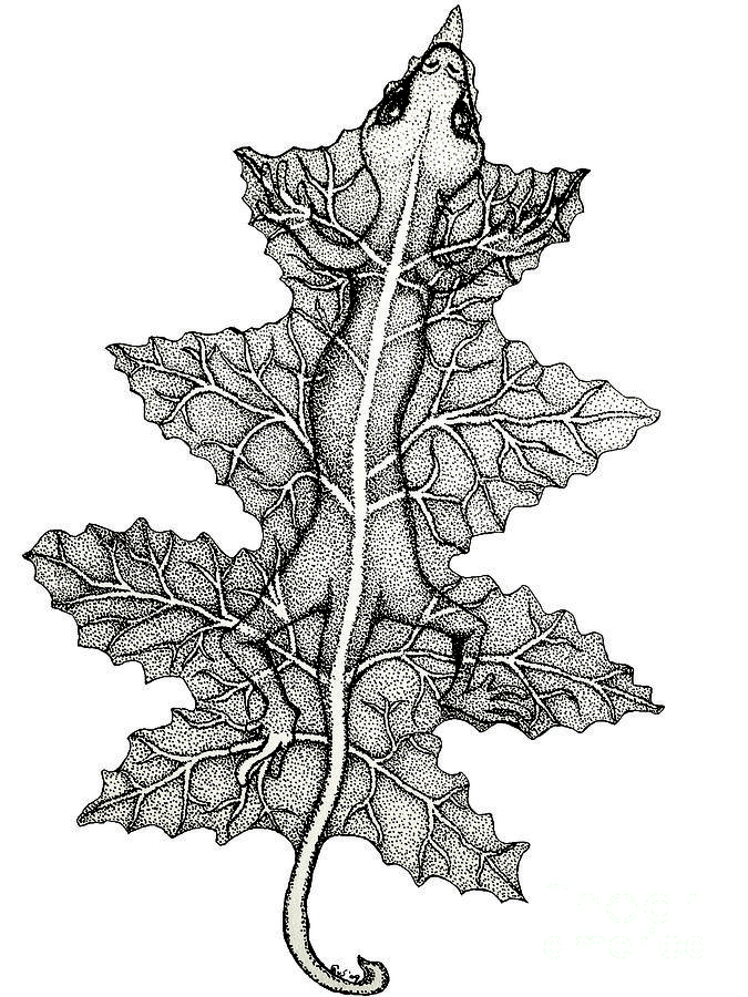 Lizard And Leaf Drawing  - Lizard And Leaf Fine Art Print
